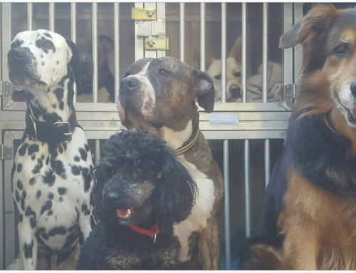 Miriam Cremer – Hundetraining & Hundebetreuung